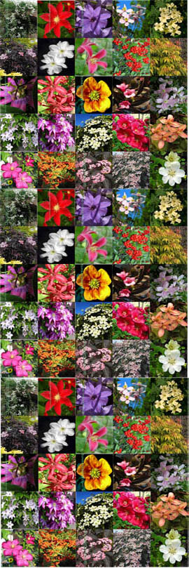 50+PLANT+PRODUCT+PROMOTION+%2D+Choose+your+own+50+Climbing+Plants+or+Shrubs+or+a+mixture+of+both+%2D+Pick+%27n%27+Mix