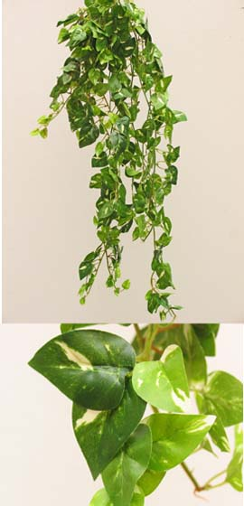 3x+Artificial+Silk+Small+Leaf+Ivy+Trailing+Plants+%28Dark+Leaf+with+a+Light+Cream+Variegation+Heart+Shaped%29+70CM+Length+%26+with+400%2B+Assorted+Sized+Ivy+Leaves