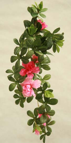 Durable Plants For The Garden: Climbing Plants Direct