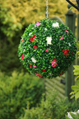 NEW PRODUCT 1 X Flowering Hanging Artificial Boxwood Topiary Ball in Pink and Cream Shades – 36cms (14 inch)  -  High quality two-tone leaf  COMPLETE with strong hanging chain with removable clips if you wish to use in pots or containers.