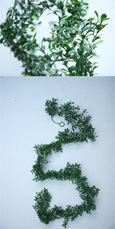 2 X Artificial 6ft (183cms) Boxwood leaf Garlands in Green  for Inside & Outside Use