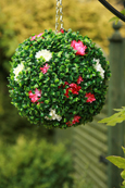 NEW PRODUCT 1 X Flowering Hanging Artificial Boxwood Topiary Ball in Pink and Cream – 28cms (11inch)  -  High quality two-tone leaf  COMPLETE with strong hanging chain with removable clips if you wish to use in pots or containers.