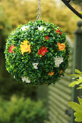 NEW PRODUCT 1 X Flowering Hanging Artificial Boxwood Topiary Ball Terracotta and Cream – 28cms (11inch)  -  High quality two-tone leaf  COMPLETE with strong hanging chain with removable clips if you wish to use in pots or containers.