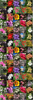 10 PLANT PROMOTION- Choose your own 10 Established Climbing Plants - Pick 'n' Mix