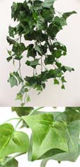 3x Artificial Silk Large Ivy Trailing Plants (Rich Dark Green) 70 CM Length & with 170+ Large Ivy Leaves