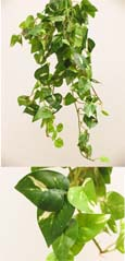 3 X Artificial Silk Small Leaf Ivy Trailing Plants (Dark Leaf with a Light Cream Variegation Heart Shaped) 40 CM Length & with 130+ Assorted  Sized Ivy Leaves