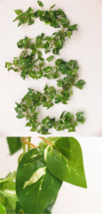 3 X Artificial 6ft (180cms) Mini-Heart Shaped Ivy Leaves Garlands in Green &  Rich Cream for Inside & Outside